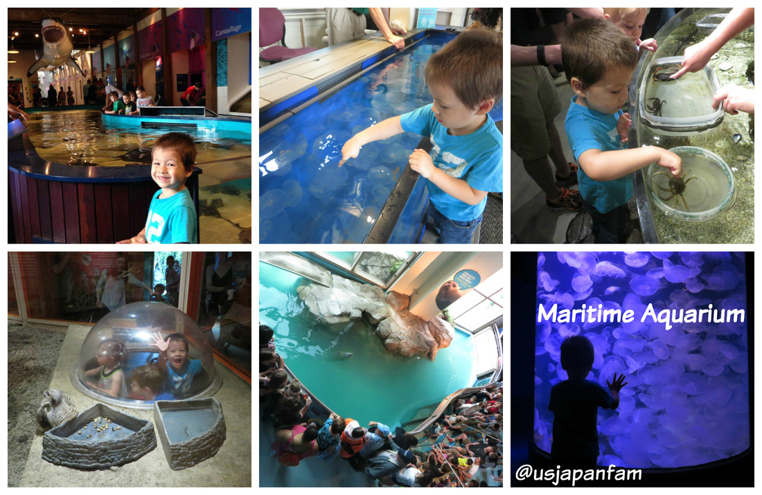 US Japan Fam loves Maritime Aquarium at Norwalk