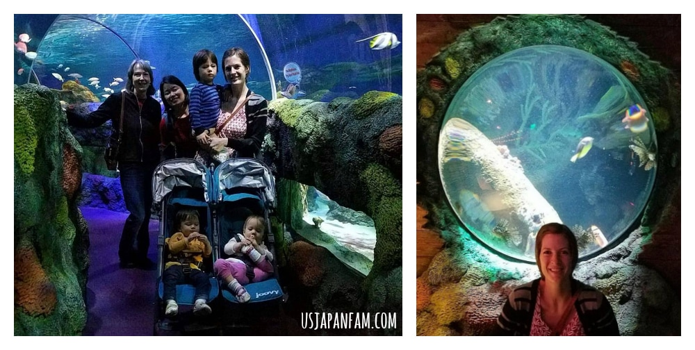 US Japan Fam loves Sea Life Charlotte-Concord Aquarium!